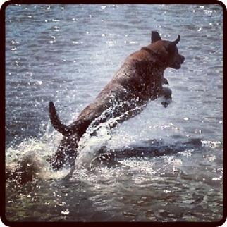 Bo Dolphin
